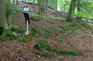 Coppice boundary foundations in High Hag Wood, St Catherine's Estate